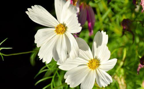 white flower macro pistil