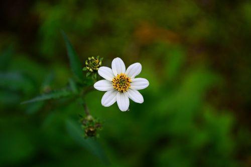 white flower flower blossom