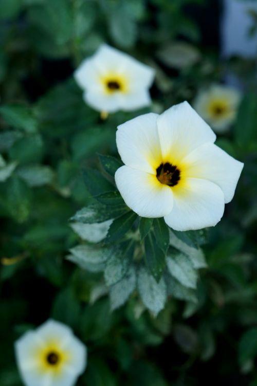 white flower flower tranquility