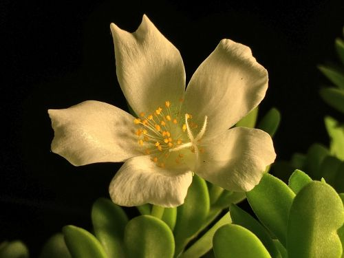 white flower white petals flower