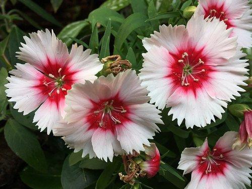 white flower  pistils  flower