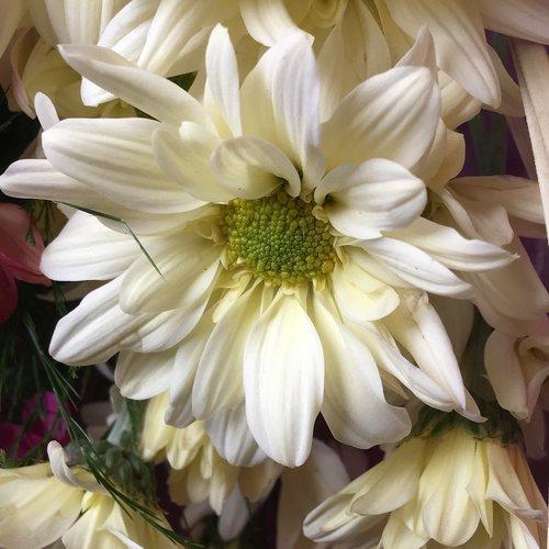 white flower  stamens  flower
