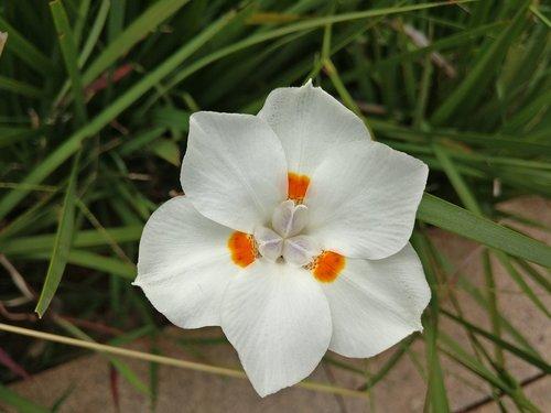 white flower  green  nature