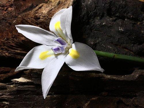 white flower  white petals  white