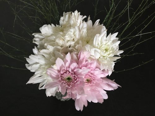 white flowers,pink,rosa,flowers,flower,white,nature,garden,petals,bouquet,spring,white flower,white color,beauty,gardening,plants