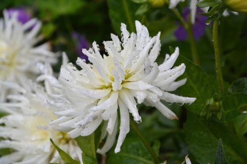 white flowers nature bouquet