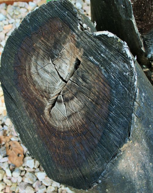 medis, supjaustyti, mediena, miręs, žvyras, balta žvyras aplink negyvą medieną