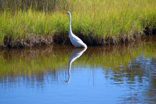 white heron bird wildlife