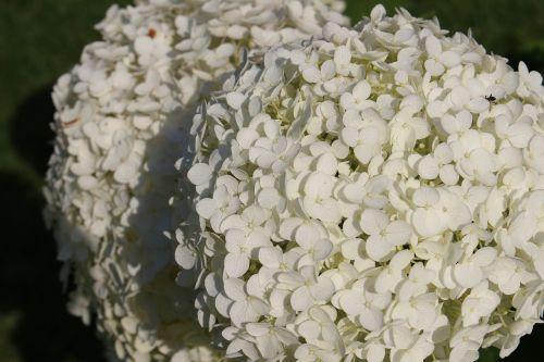 white petals flower plant