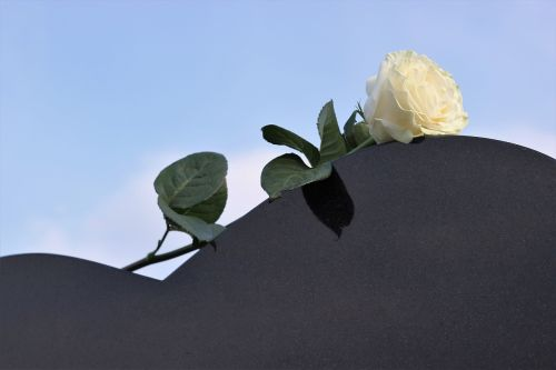 white rose heart gravestone love