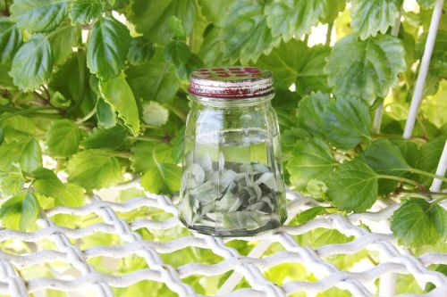White Sage Infused Oil
