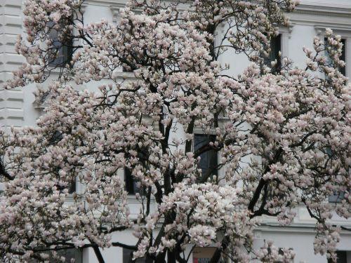 white splendour flowers white