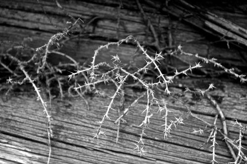White Thorns On Wooden Floor
