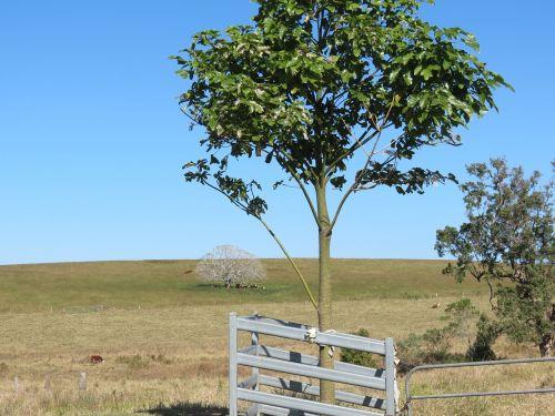 baltas medis,vaiduoklis,Šalis,gamta,medžiai,šalies nuosavybė,vartai,medis,vaiduoklis,balta,kraštovaizdis,dangus,laukas,paddock,žolė
