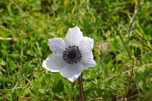 white tulip browse antalya patara