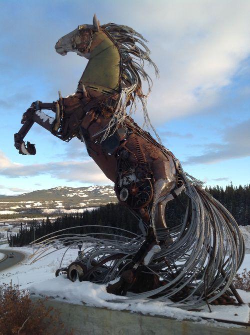 whitehorse yukon horse
