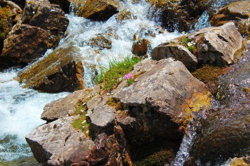 wild water nature