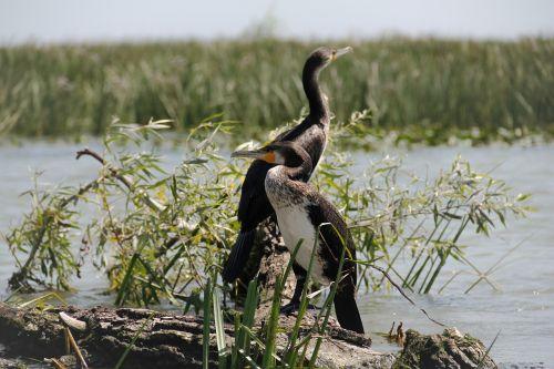 wild nature wildlife