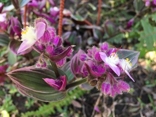 wild plant plant wildlife