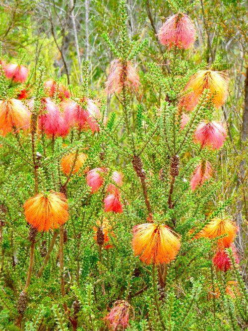 wild flower flora