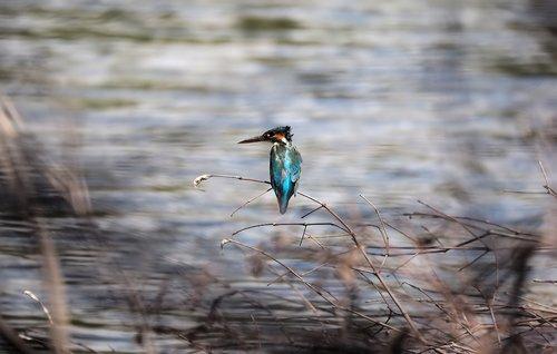 wild  bird  animal