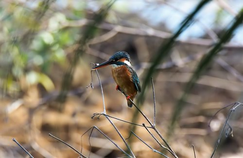 wild  bird  wildlife