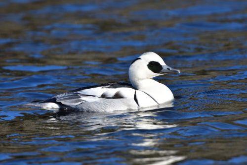 wild animals bird waters