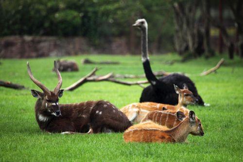 Wild Animals Resting