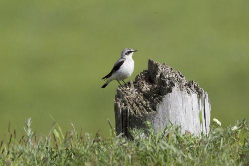 wild birds 朽木 meadow