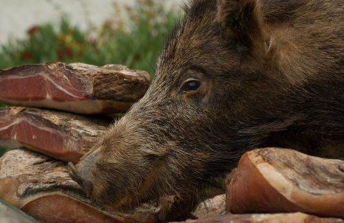 wild boar delicatessen hunting
