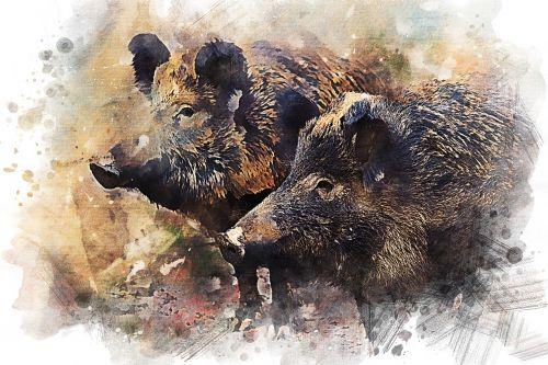 wild boar pig animal