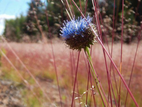 wild flower field beautiful