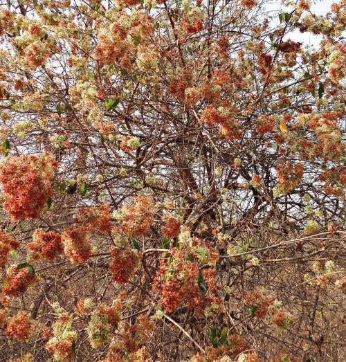 wild flower blossom profusion