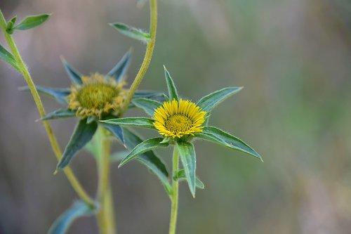 wild flower  garden  plant