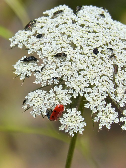 wild flower  insects  libar