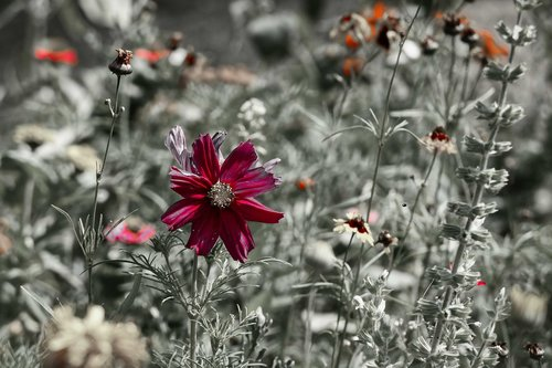 wild flower  bloom  nature
