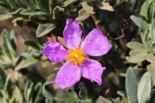 wild flower pistils beauty