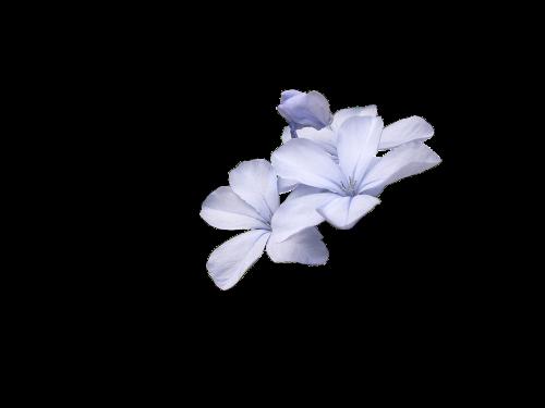 wild flowers blue wild flower