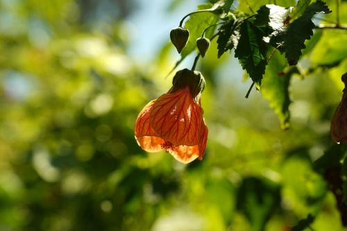 wild flowers adelaide blossom