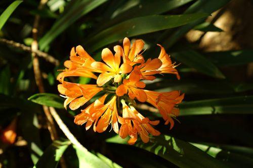 wild flowers st john lili adelaide