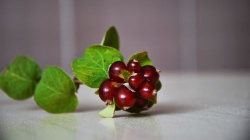 wild fruit fruit fresh
