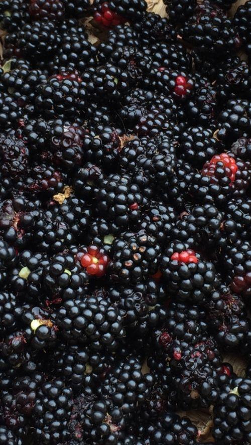 wild fruit fruit blackberry