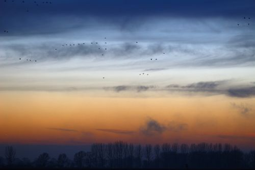 wild geese evening sky nature