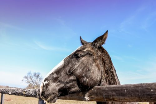 wild horse horses in ranch horse in farm