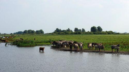 wild horses horses nature reserve
