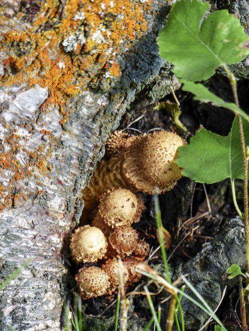 wild mushroom tree mushroom