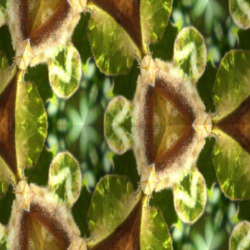 Wild Rose In Kaleidoscope