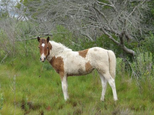 Wild Yearling