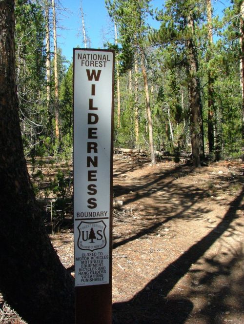 wilderness forest national park