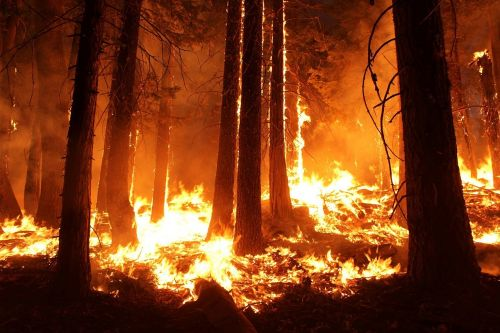 wildfire forest fire